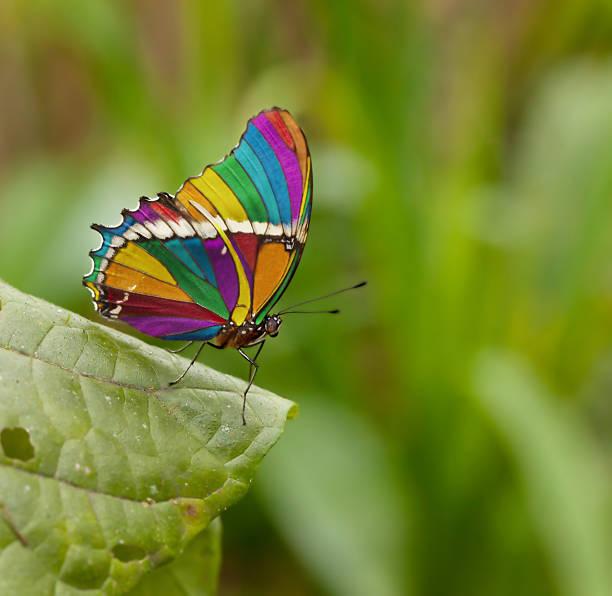farfalle colorate foto e immagini stock istock