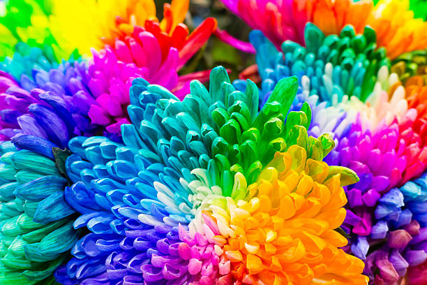 Royalty free multi colored background pictures images and for How to make multi colored flowers