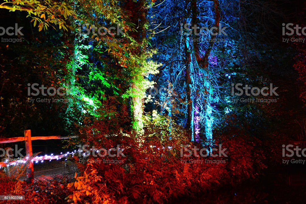 Rainbow Coloured Trees at Night foto stock royalty-free
