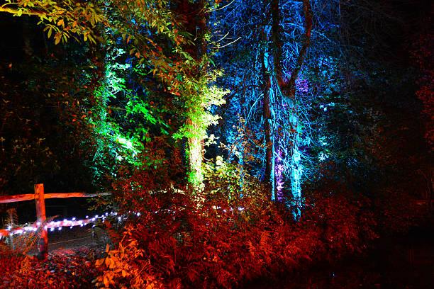 Rainbow Coloured Trees at Night stock photo