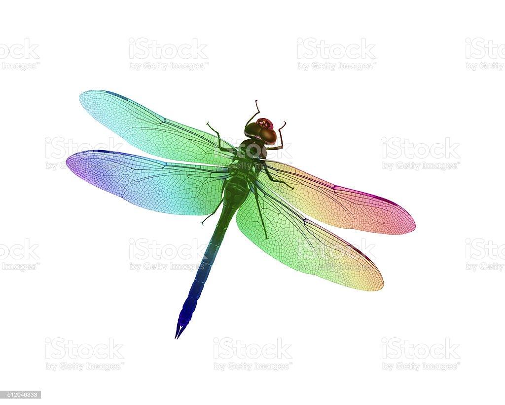 Dragonfly Rainbows