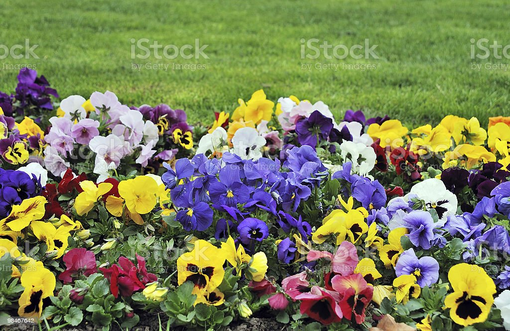 Rainbow flowerbed royalty-free stock photo
