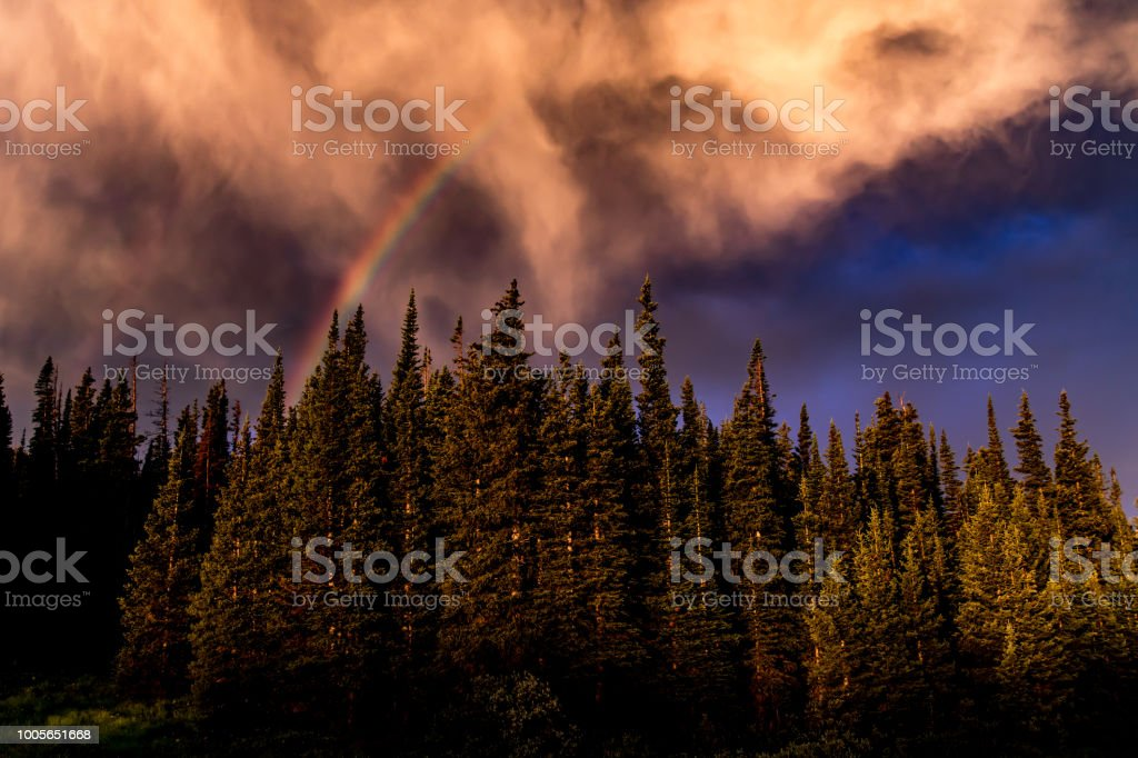 A Rainbow forms over a stand of pine trees stock photo
