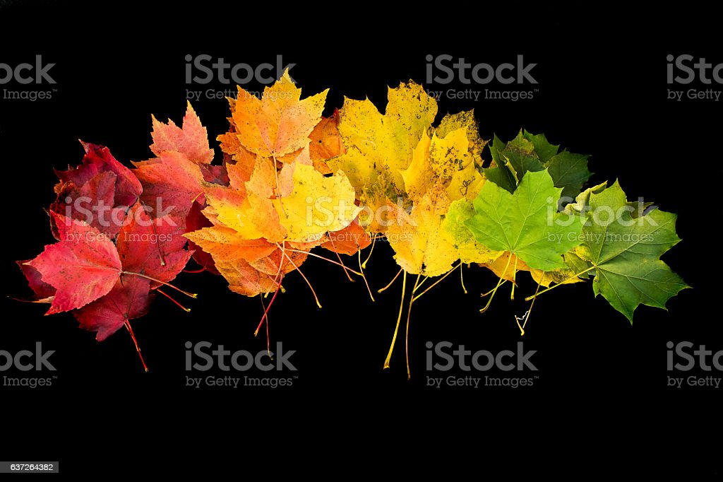 rainbow leaves on black background – Foto