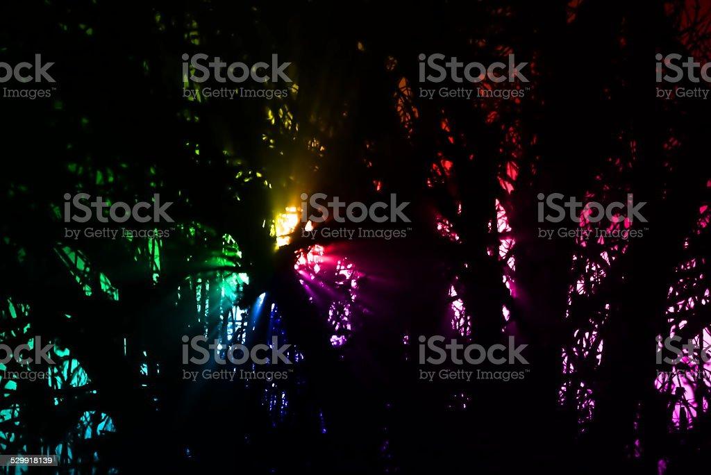 Luzes do arco-íris na floresta - foto de acervo