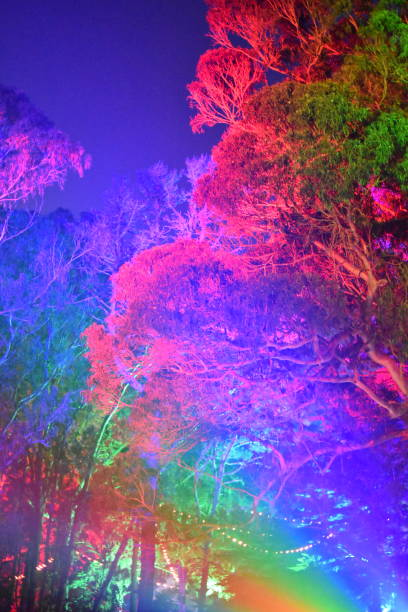 rainbow lit trees - steven harrie stock photos and pictures