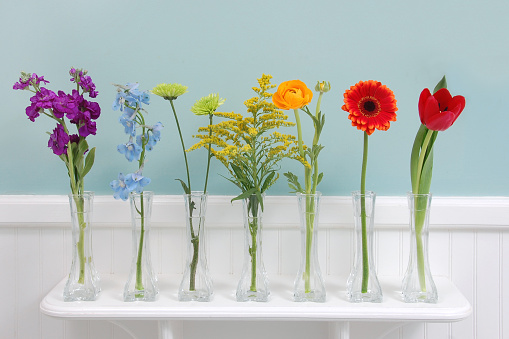 Cut flowers in all the colors of the rainbow arrayed upon a shelf.  Purple stock, blue delphinium, green mum, golden aster, yellow ranunculus, orange gerber daisy, and red tulip.