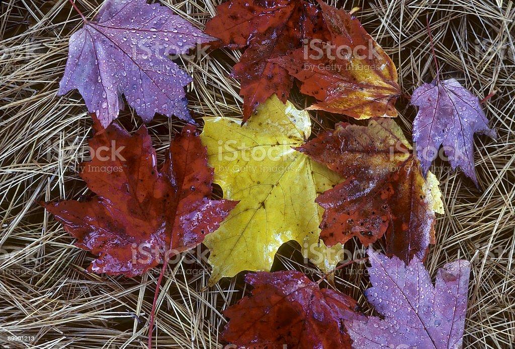 Rainbow de hojas con fregadero foto de stock libre de derechos