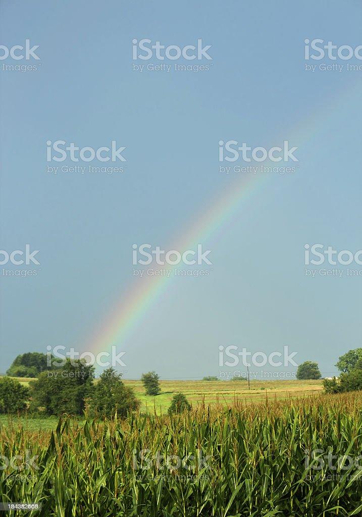 Rainbow Over a Cornfield stock photo