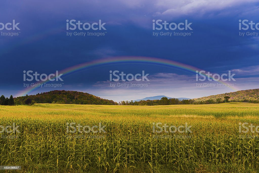 Rainbow over a golden field of corn. royalty-free stock photo