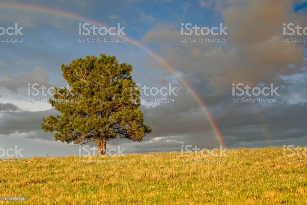 Rainbow Over a Lone Tree stock photo