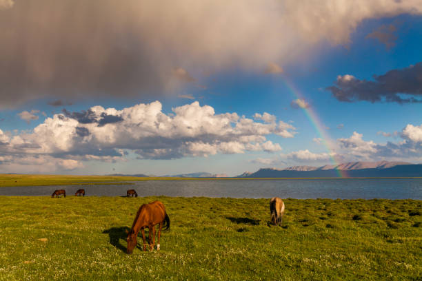 Rainbow over a mountain lake. Horses on the shore of the lake stock photo