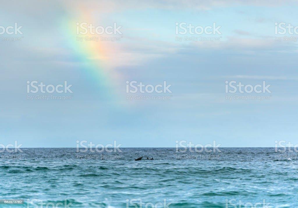 Rainbow over dolphins stock photo