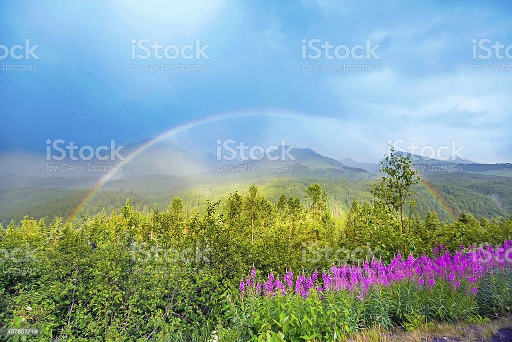 Rainbow over fireweed in field with mountains and trees  RM royalty-free stock photo