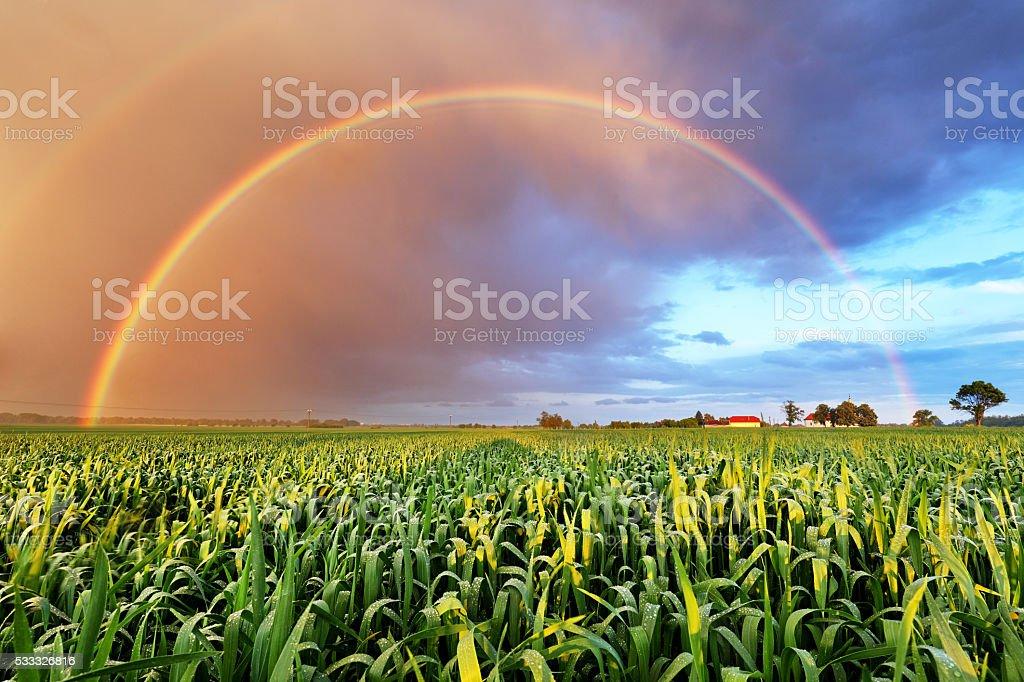 Arco iris sobre el campo de trigo, paisaje de naturaleza - foto de stock