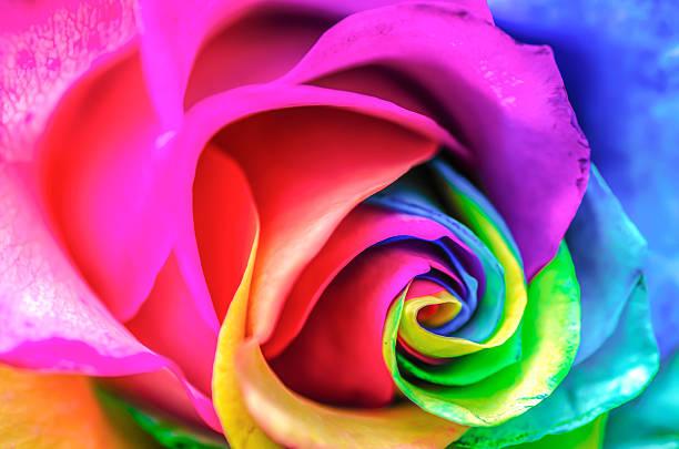 Rainbow rose close up picture id459642617?b=1&k=6&m=459642617&s=612x612&w=0&h=sjstcxp9ttvtjb0o1gcaolh wp8ehcei30c2uoipdn8=