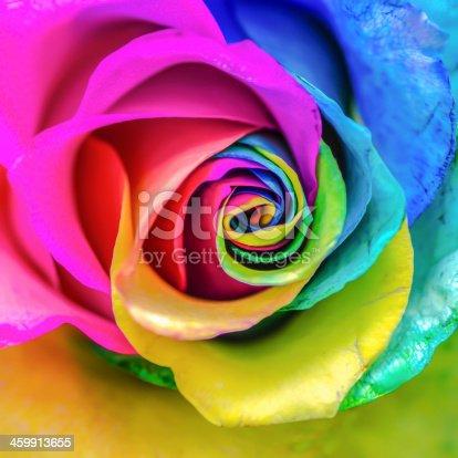 istock Rainbow Rose 459913655