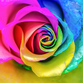 Abstract Rainbow Rose