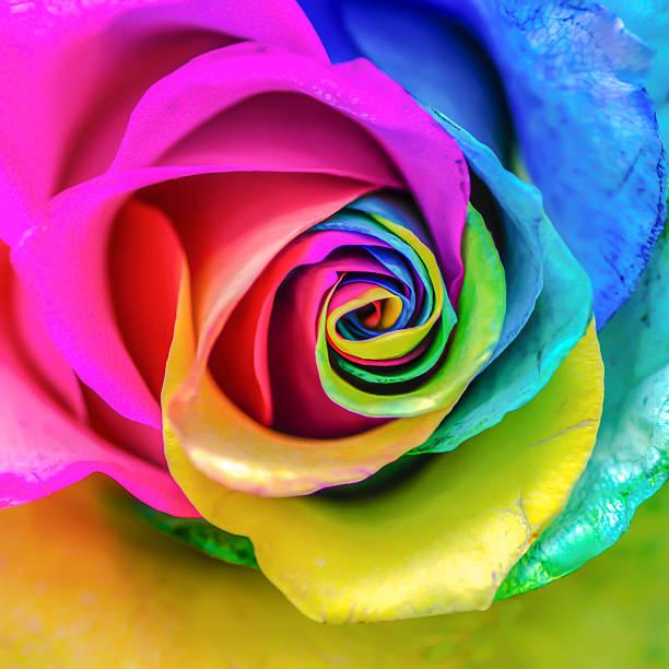 rainbow-rose - glasmalerei stock-fotos und bilder