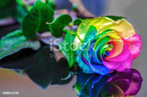 istock Rainbow Rose Reflection 459644249