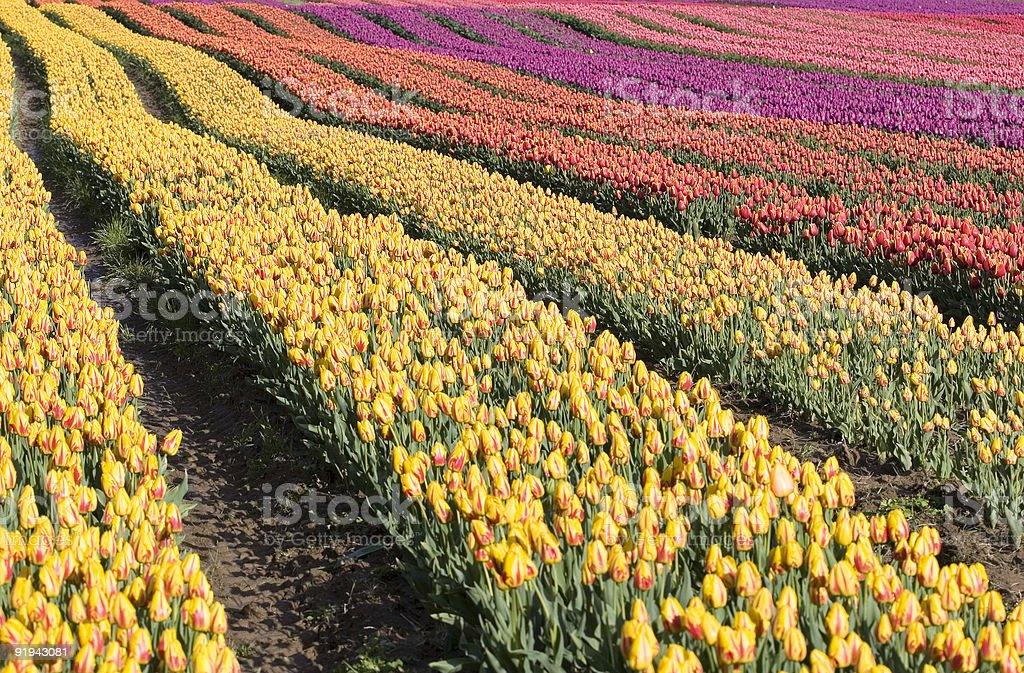 Rainbow rows stock photo