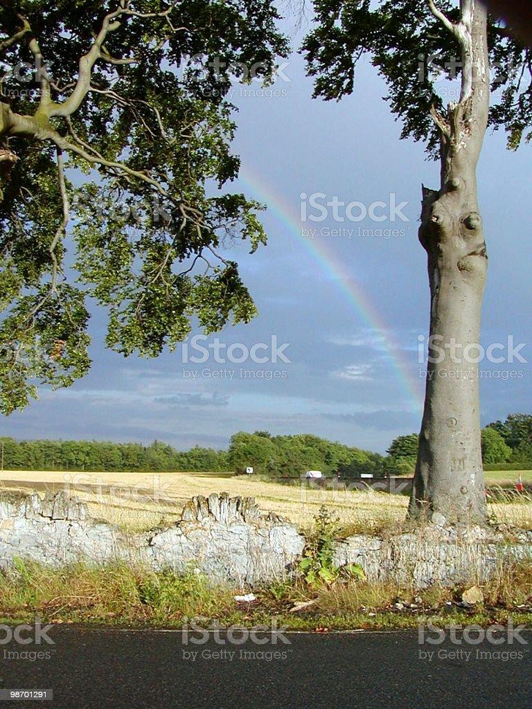 Rainbow Tree royalty-free stock photo