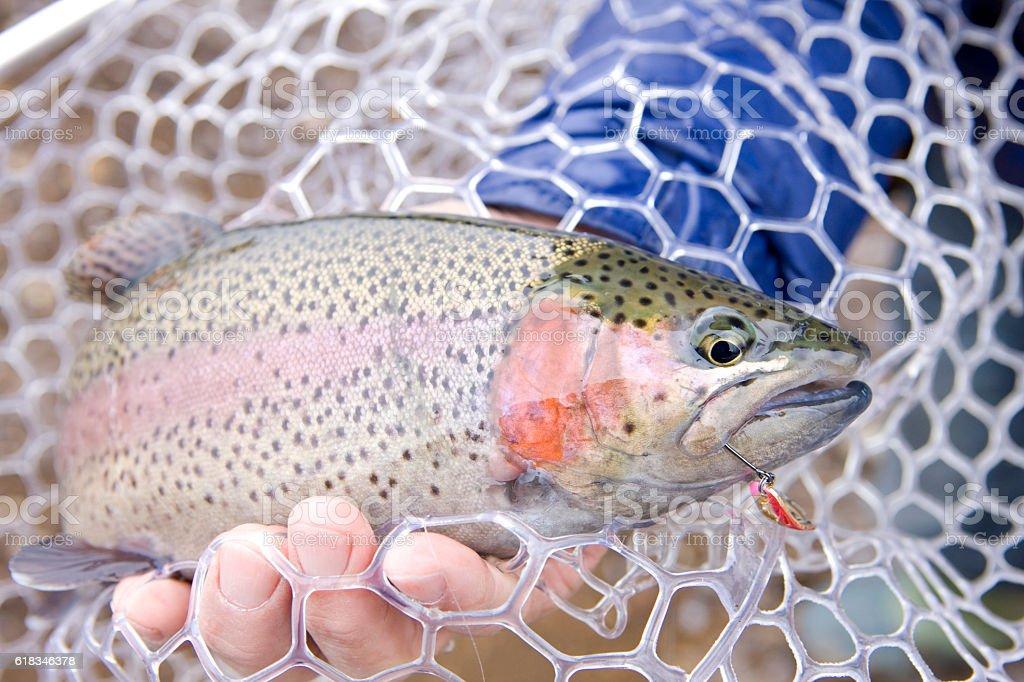 Rainbow trout fishing stock photo