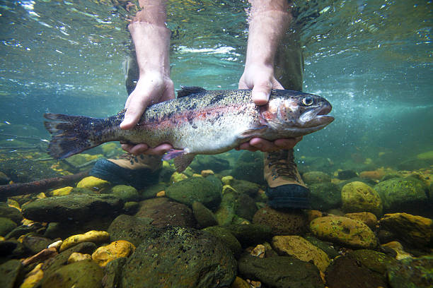 Rainbow Trout Unterwasser – Foto