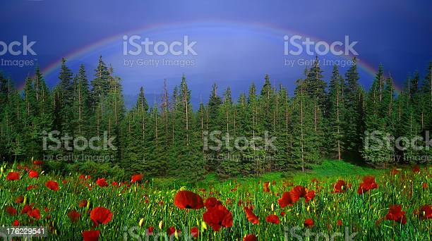 Photo of Rainbow-arc