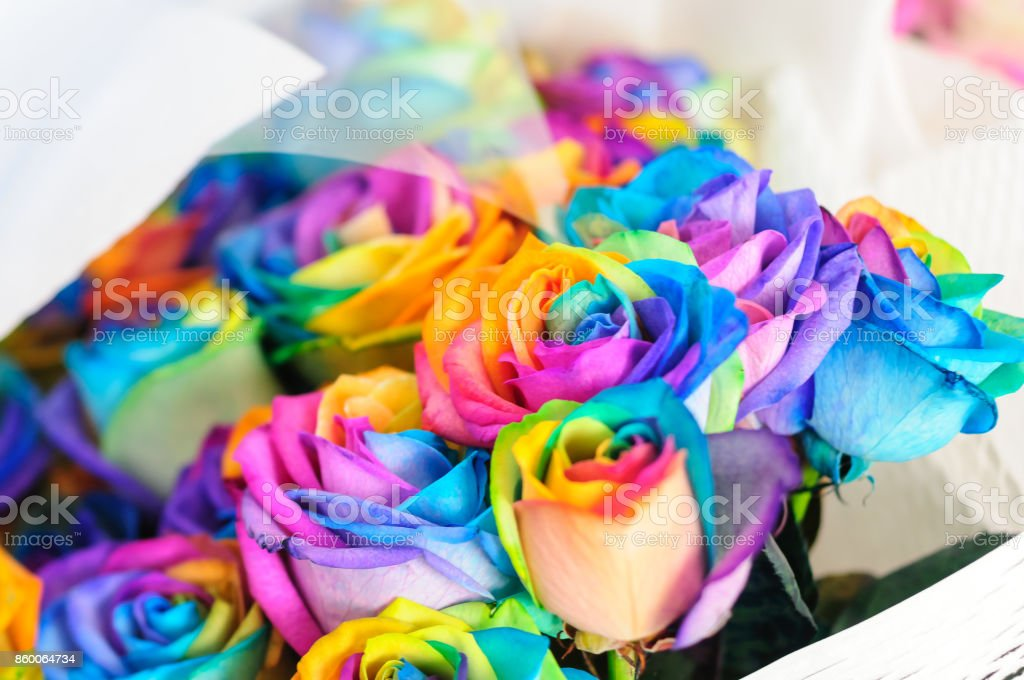 A rainbow-colored, colorful rose stock photo