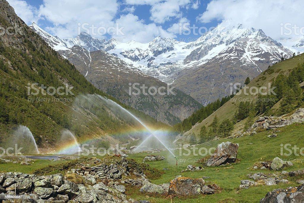Rainbows in irrigation water spouts on summer Alps mountain hill royalty-free stock photo