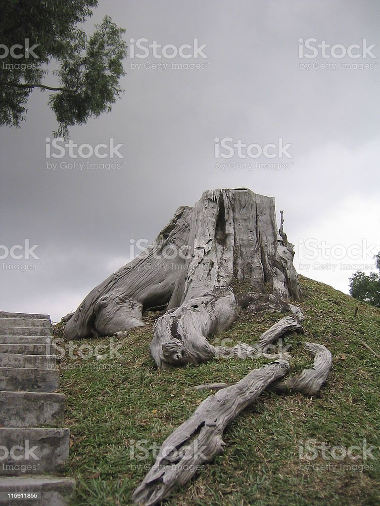 Rainclouds loom over gnarled tree stump royalty-free stock photo