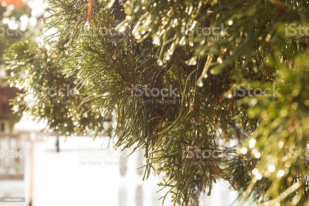 Raindrop on tree branch. royalty-free stock photo