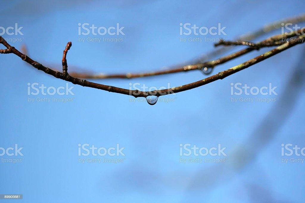 Raindrop royalty-free stock photo
