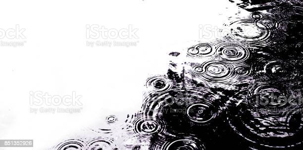 Photo of Raindrops in a pond
