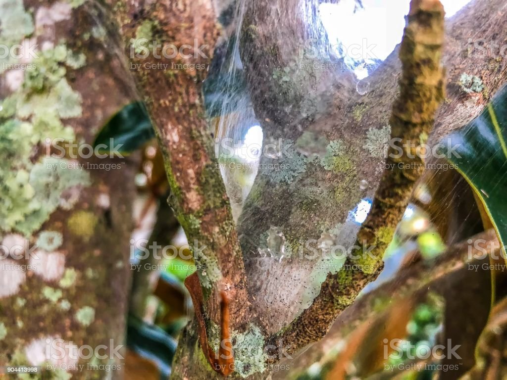 raindrops in a spiderweb stock photo