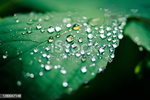 Close up shot of raindrops in nature with reflection