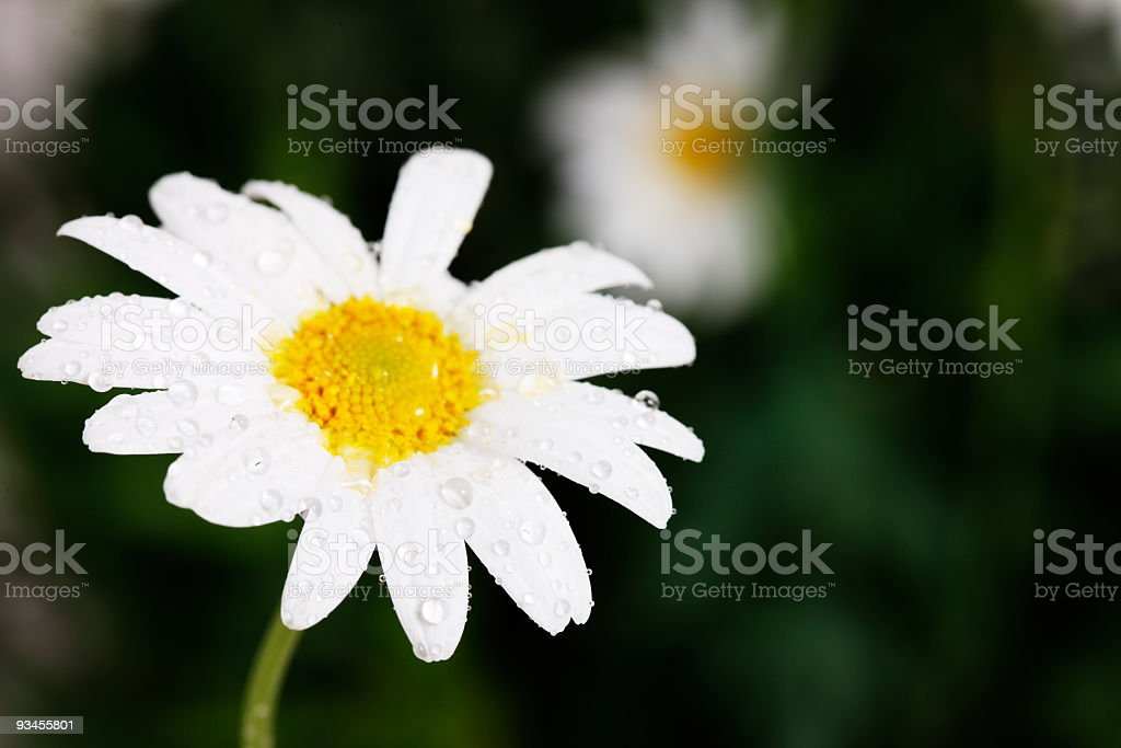 Raindrops on a flower stock photo