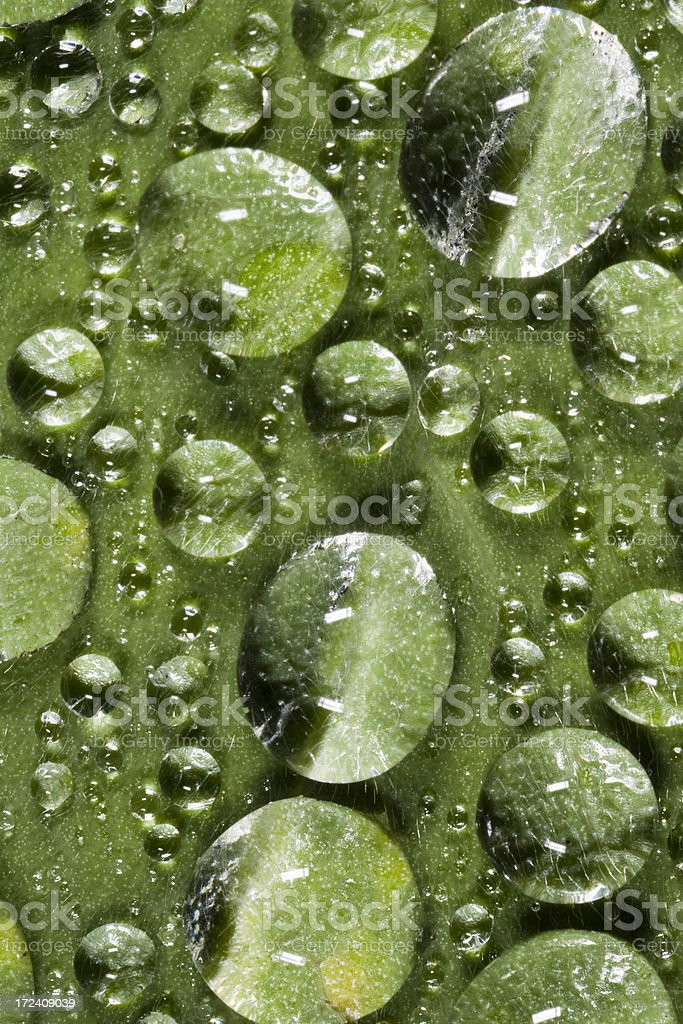 Raindrops on a leaf royalty-free stock photo