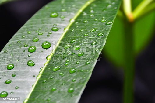 istock Raindrops on a leaf 637630374