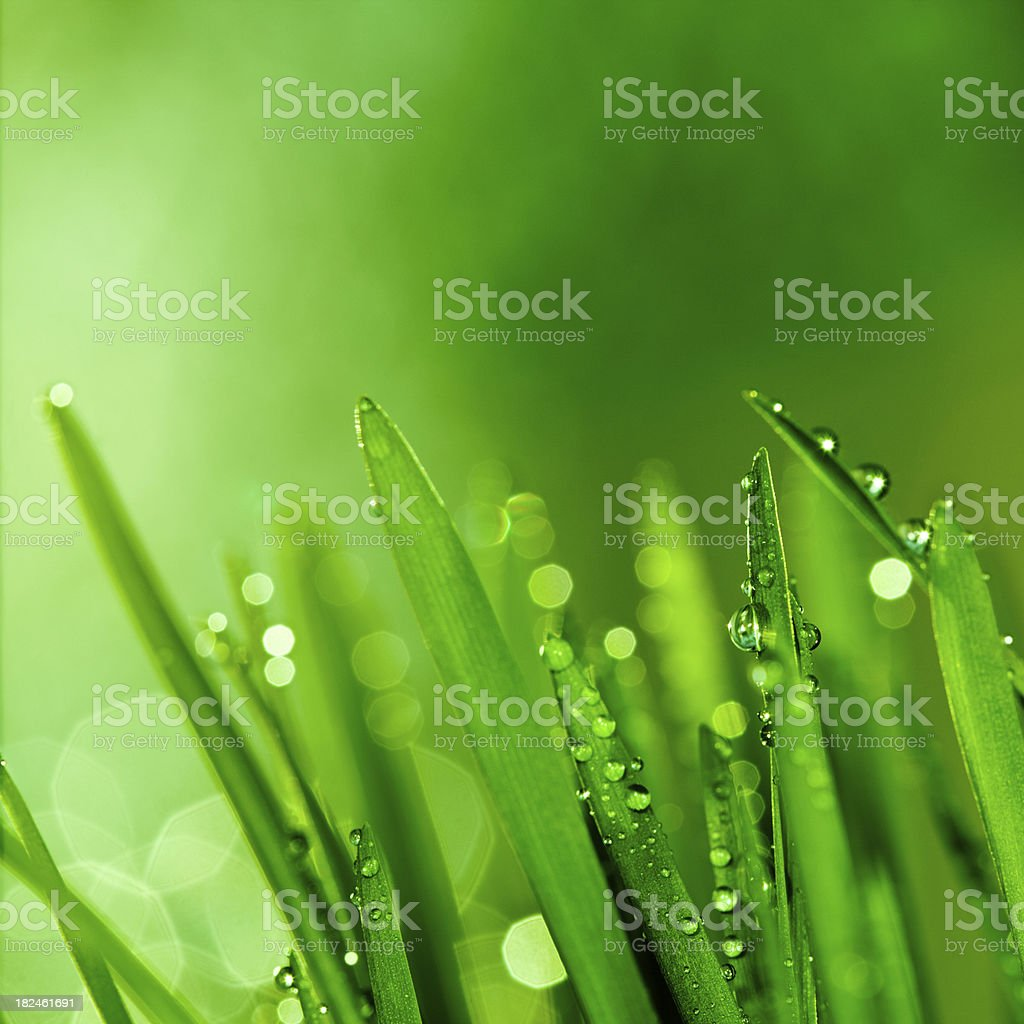 Raindrops on blades of grass stock photo