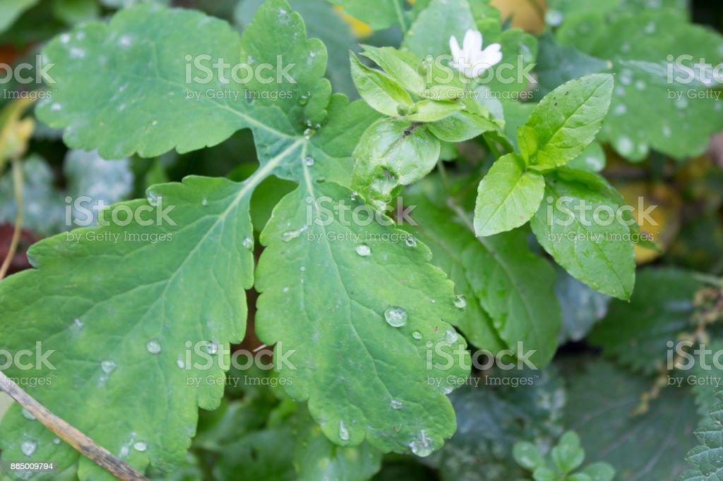 raindrops on green leaves stock photo