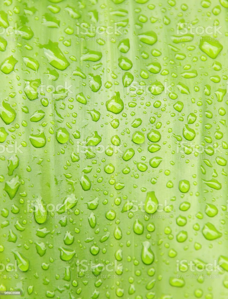 Raindrops on green tropical leaf royalty-free stock photo
