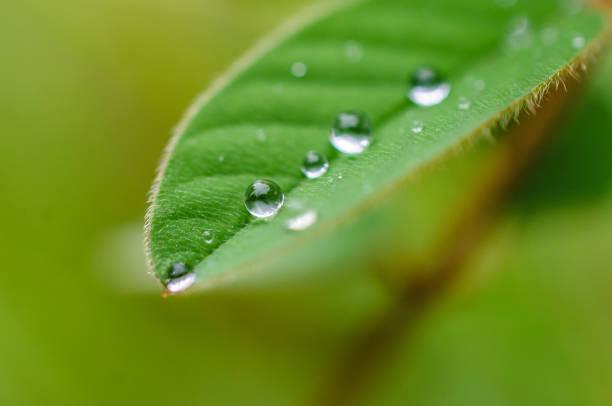 Raindrops on leaf stock photo