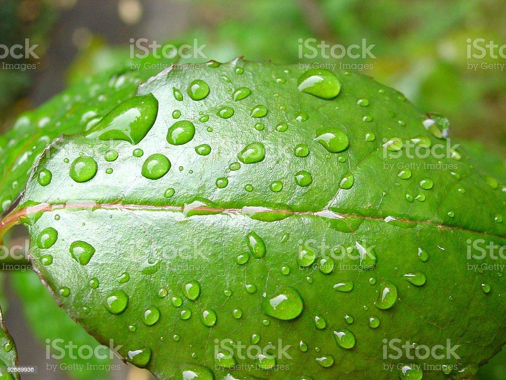raindrops on leaf royalty-free stock photo