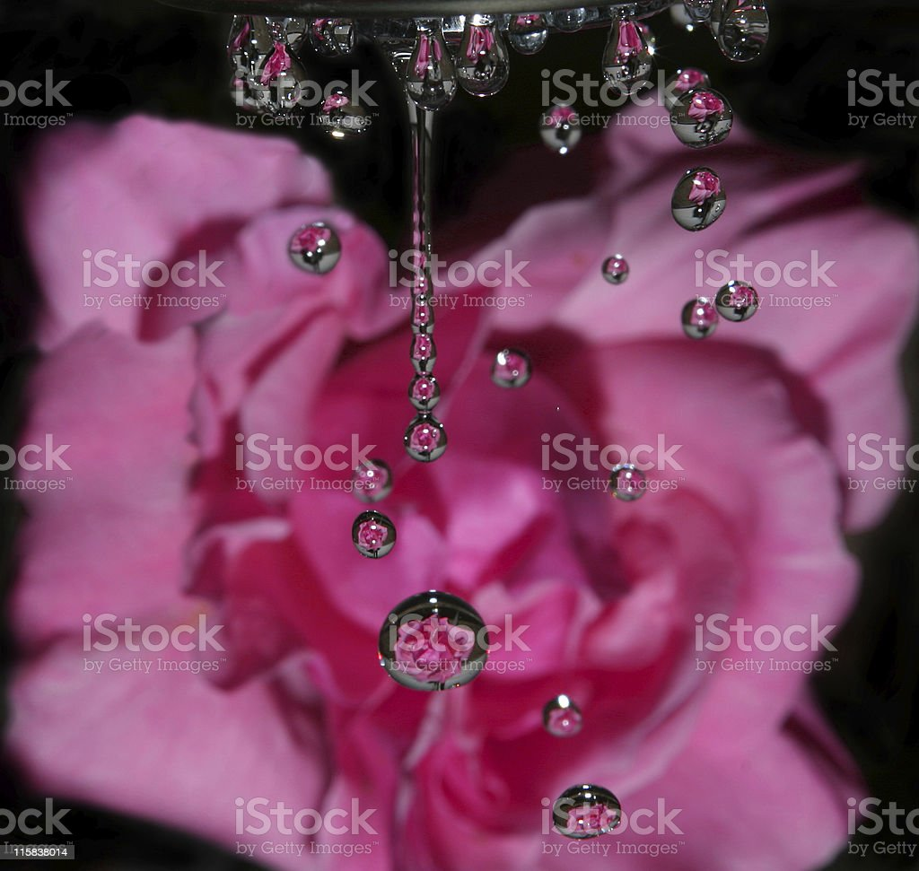 Raindrops on Roses 2 royalty-free stock photo