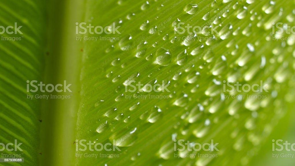 Raindrops Perched on a Big Fern foto royalty-free