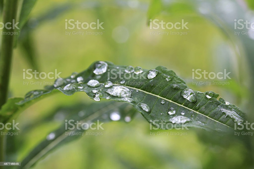 raindrops stock photo