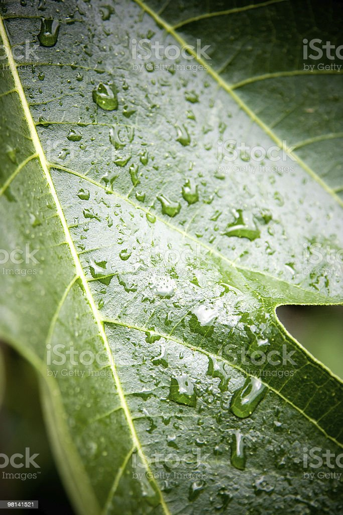 Raindrops royalty-free stock photo