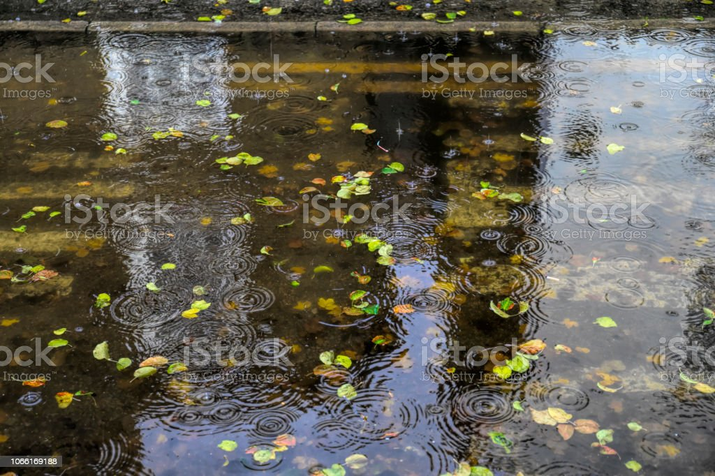 Raindrops splash into a puddle of water with autumn leaves stock photo